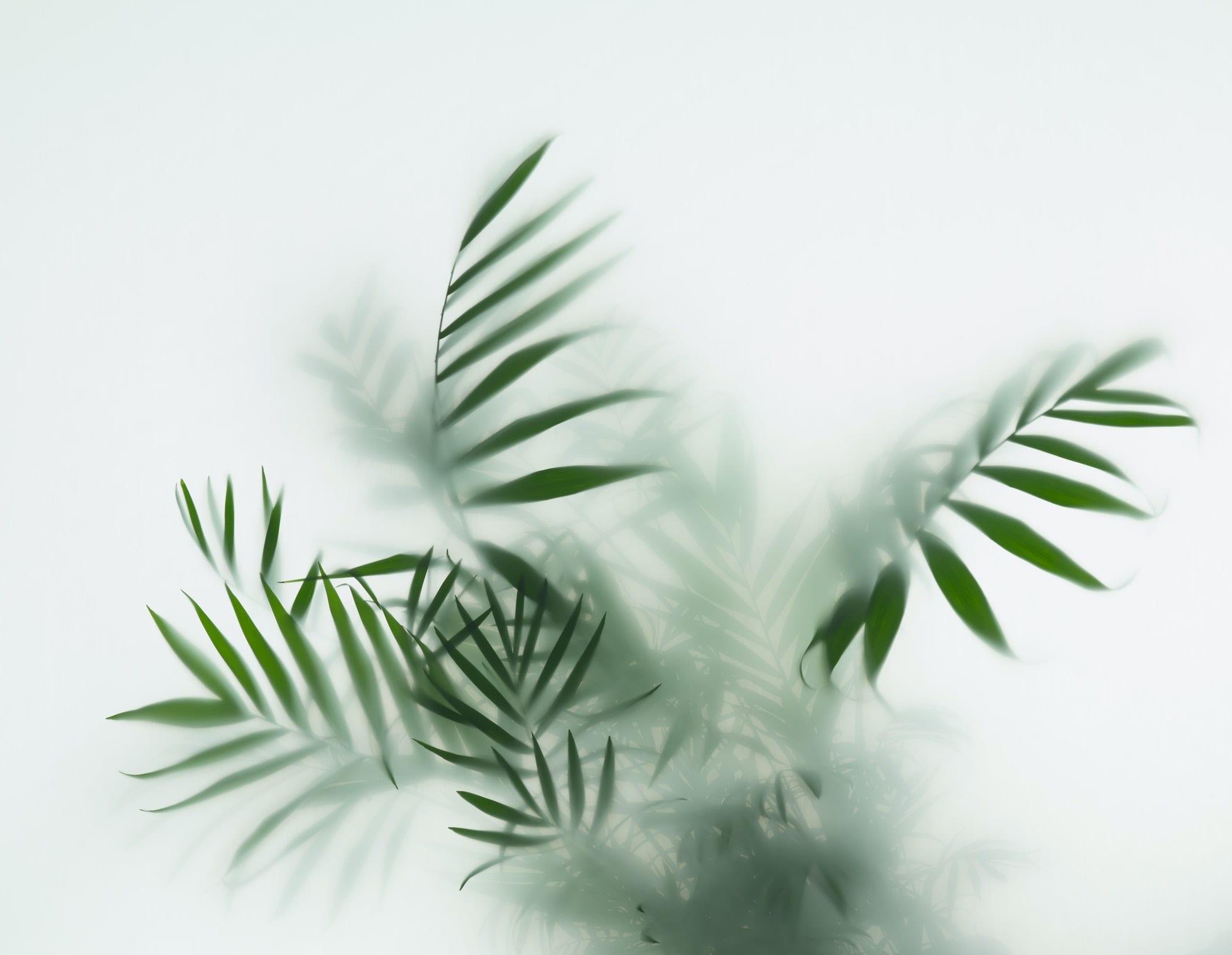 palm in fog